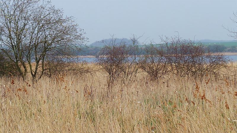 Ostufer der Trave