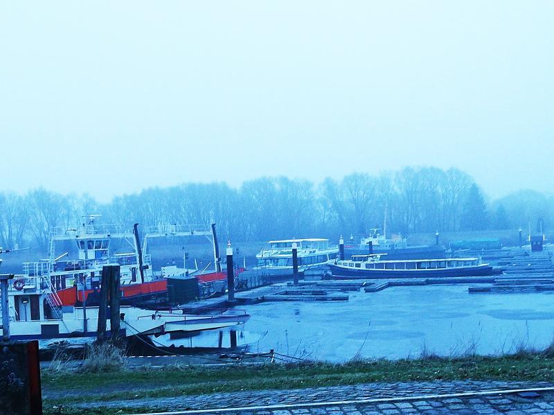 Elbe im Stintland